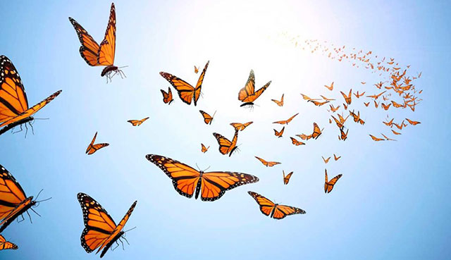 "The Monk and The Butterfly: ""It's All In Your Hands"""